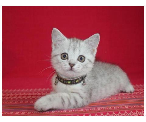 Шикарный котенок