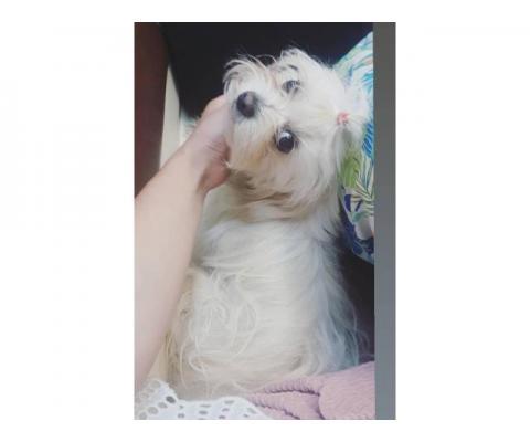 Потерялась собака