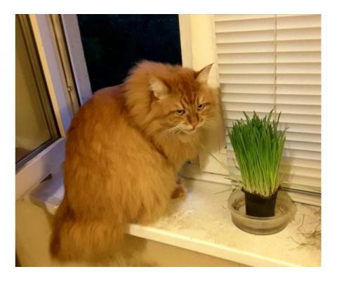 Кошка Пуська ищет дом!