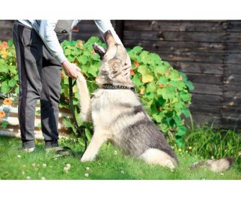 В добрые руки чудо-пес Добрыня