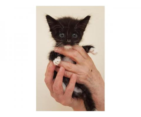 Совсем маленькие котята в дар