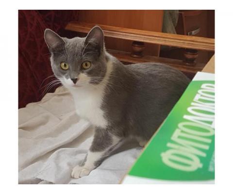 Серо-белый котик Вася ищет дом