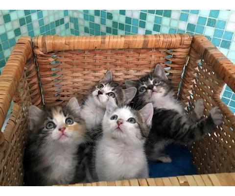 Очаровательные крохи-котята, мальчики и девочки в добрые руки