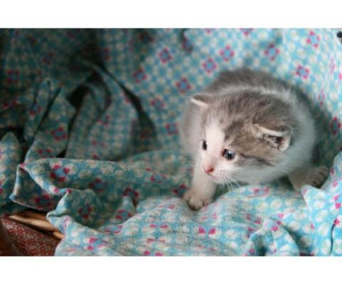 Кошечка-крошечка в добрые руки