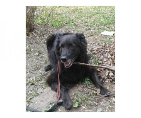 Пропала собака черный окрас