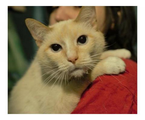 Ласковый и спокойный котик Петя ищет дом