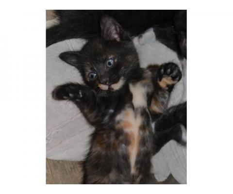 Отдам котят в добрые руки (Краснодар)