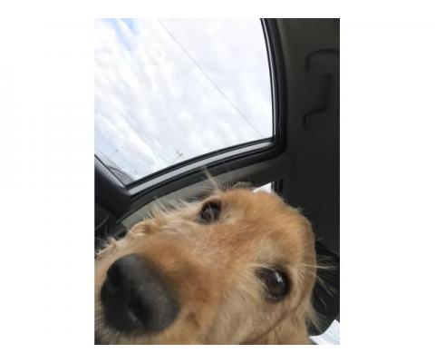 Пропал пес кострома