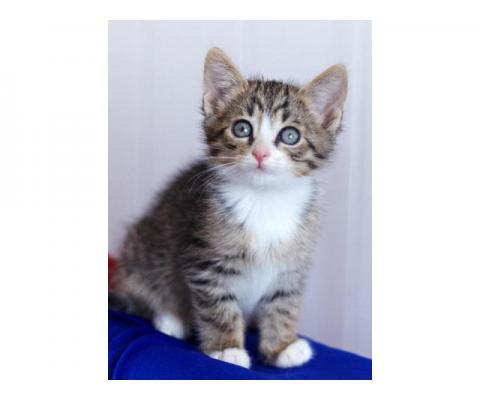 У меня уже готов для тебя букет котов!!!