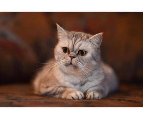Кошка Микаэла в добрые
