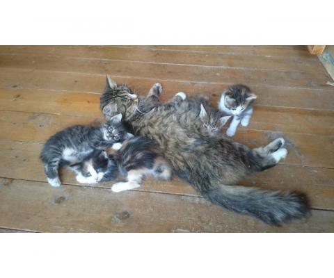 Кошка и котята в добрые руки