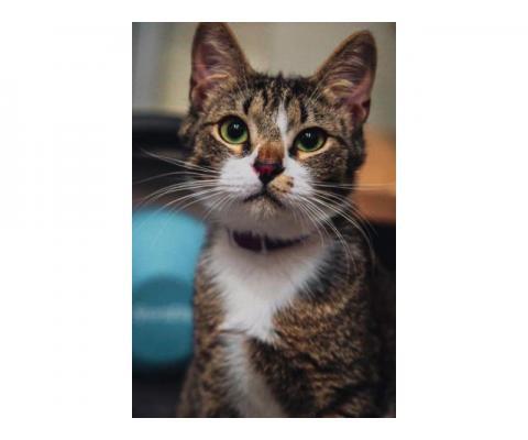 Котик-подросток со сложной судьбой ищет дом и любящую семью
