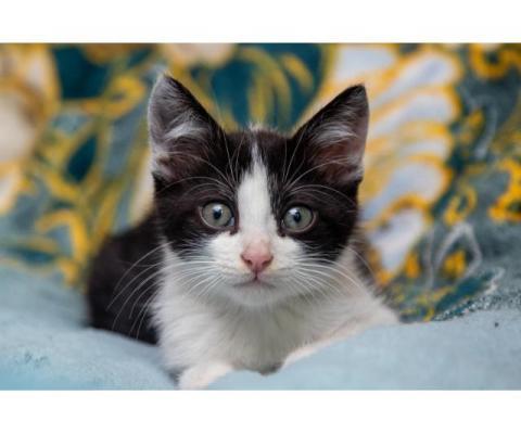 Котенок Василий ищет дом
