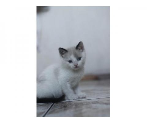 Котята  1,5 месяца ждут любящих хозяев!