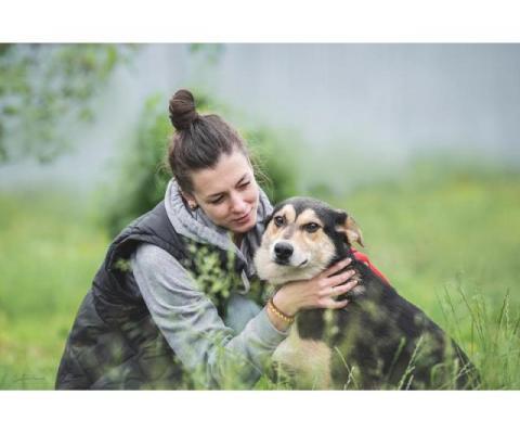 Очаровательный ласкуша Джаспер — идеальная собака для детей и семьи