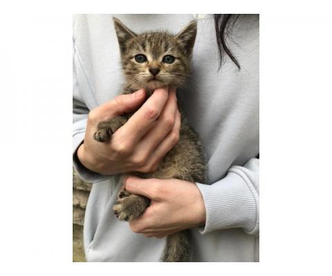 Котята в добрые руки
