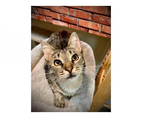 Кот Ричард 1,5 года ищет дом!