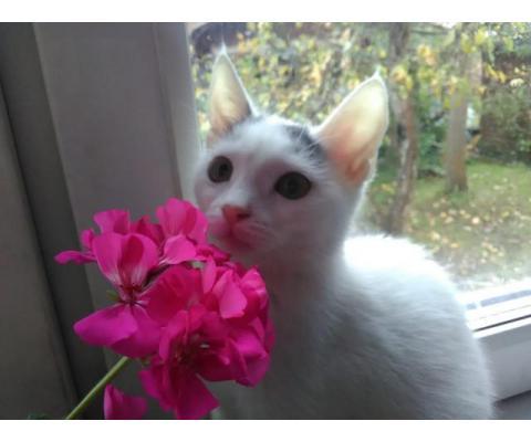 Котёнок, который никак не хотел умирать ищет дом.