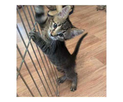 Ищут дом прекрасные котятки — сладкие пятки!
