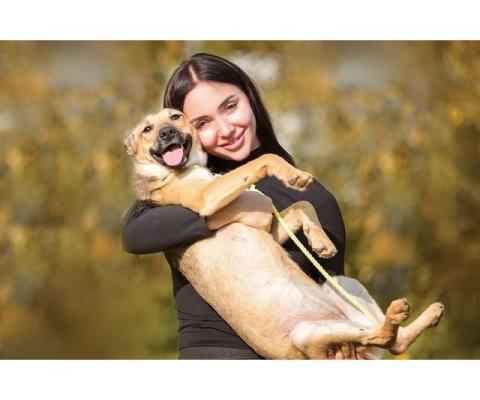 Маленькая собачка Лейла ищет дом