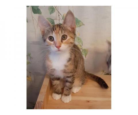 Красивые котята  ищут дом
