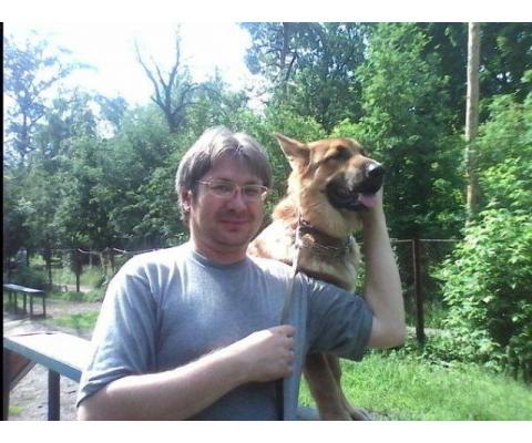 Кинолог: профессиональная дрессировка собак