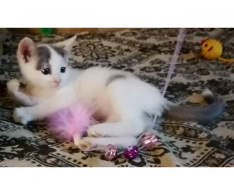 котенок 2.5 месяц