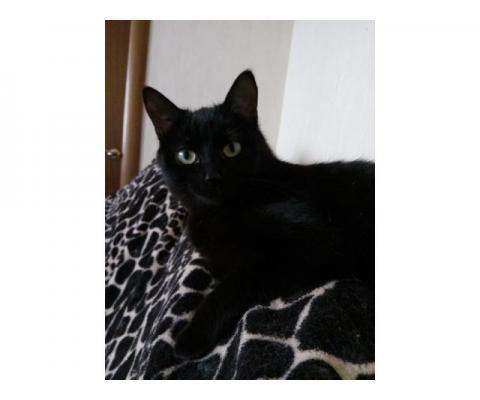 Дружочек котик Барбарис