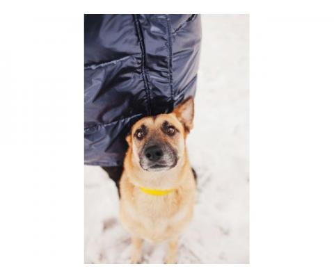 Золотая собака Марьяна ищет свой дом