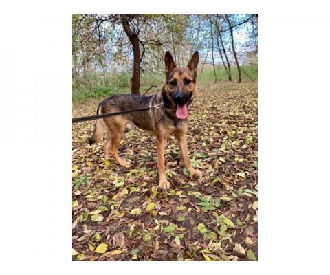 Красивый пёс Бакс в добрые руки