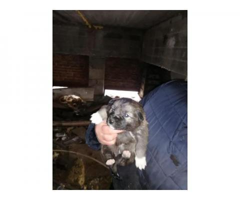 Спасите щенков ,им нужен дом