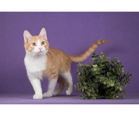 Котенок-подросток Чак в добрые руки.