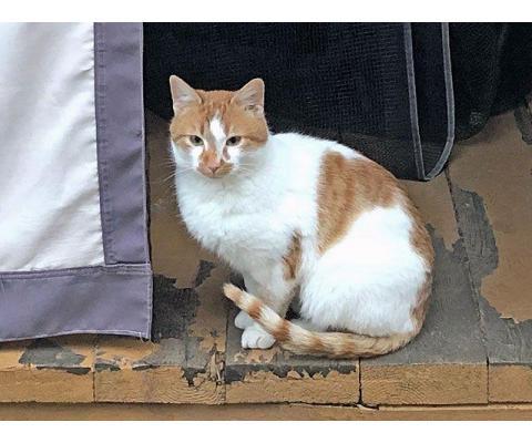 Надоевшая игрушка. Ласковый молодой котик Маркоша, забытый на даче