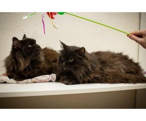 Котики очень ждут свою семью! ВДВОЕМ ИЛИ ПО ОТДЕЛЬНОСТИ.