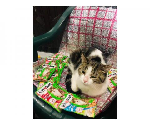 Кошечка Анфиса срочно ищет дом