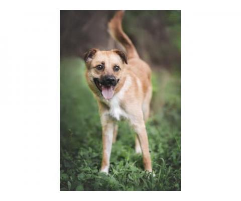 Собака  Мультик в дар- маленький ласкуша