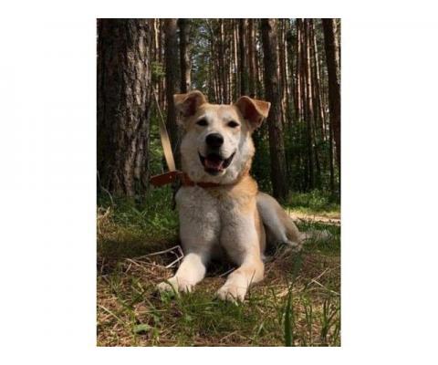Собака Жужа в дар
