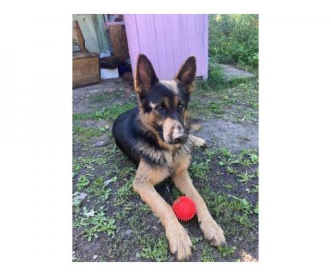 Пропала собака в районе деревень Корнеевка и Ромадановка