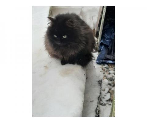 Котенок Мишутка замерзает на даче