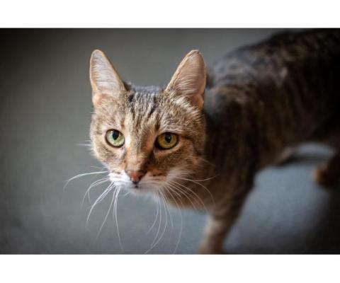 Самая ласковая и умная кошка в мире — Рыся!