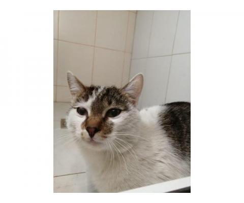Симпатичный  котик  Максик ищет дом