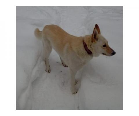 Пропала собака МО Балашиха
