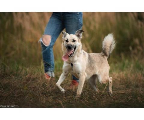 Собака-улыбака Эльза в поисках семьи!