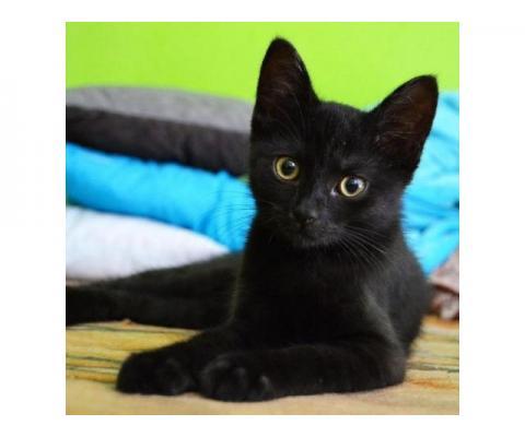 Котенок Кекс в добрые руки