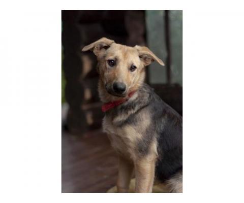 Маленькая спокойная и послушная собачка Мишель в дар