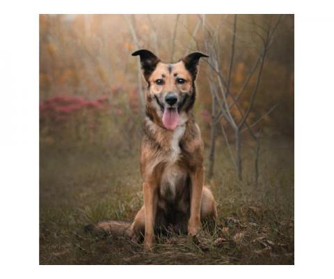 Умничка Мэрил – универсальная городская собака! Ищет семью!