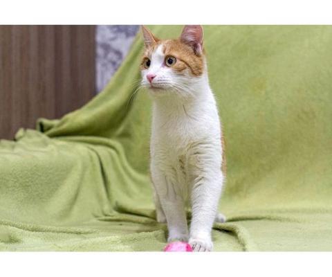 Солнечный Ральф, домашний котик-подросток ищет дом и доброе сердце