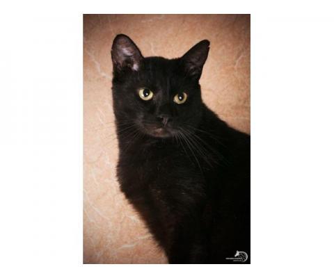 Потрясающей красоты кот Черныш