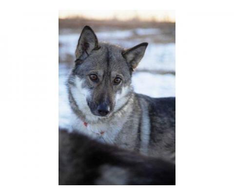 Яркая, молодая и позитивная, энергичная собака