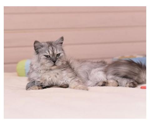 Кошечка Ариель ищет дом